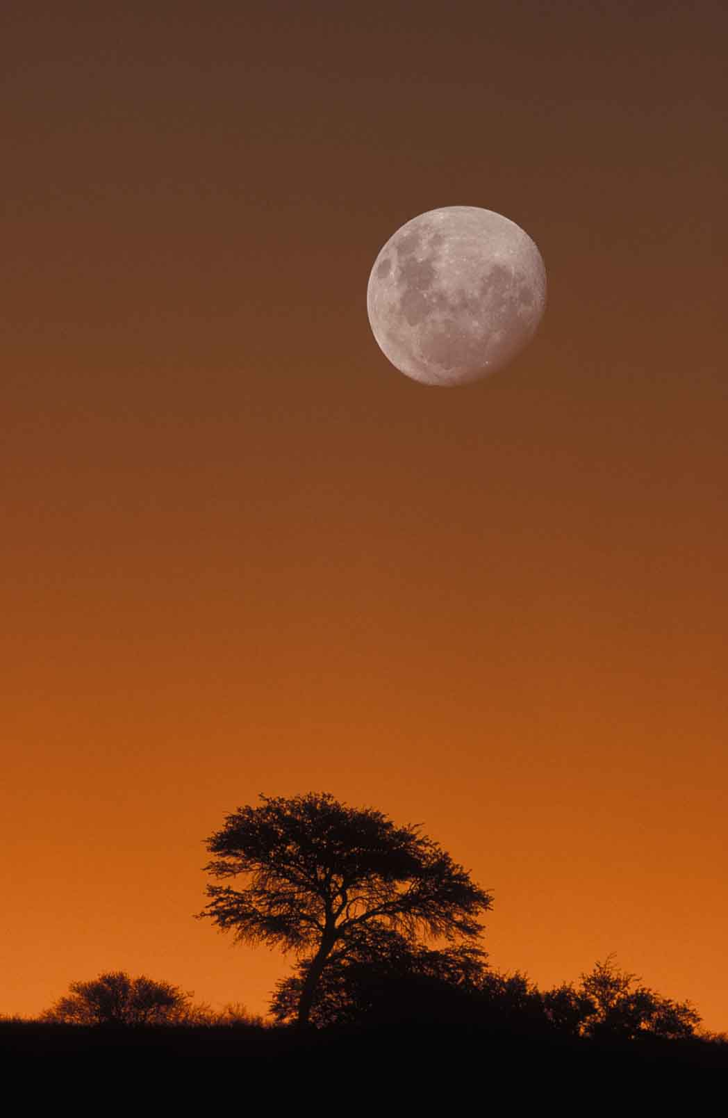 red moon in south africa - photo #26
